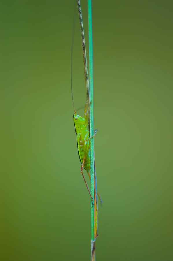 Antennae Photograph - Long And Lean by Sarah Crites