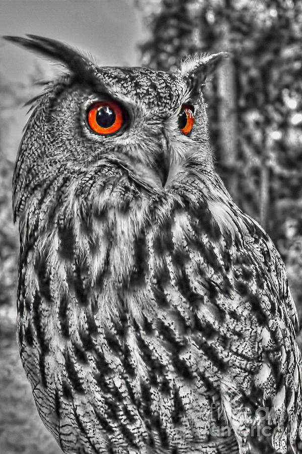 owl clark eared steve photograph 15th february which uploaded artwork artflakes