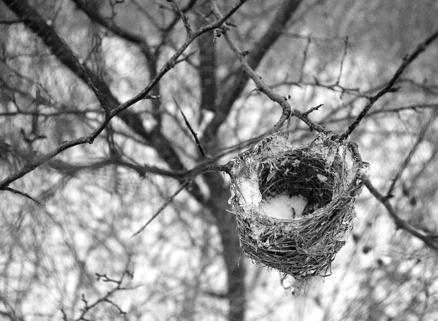 Birds Photograph - Long Gone by Indigo Wild Photography