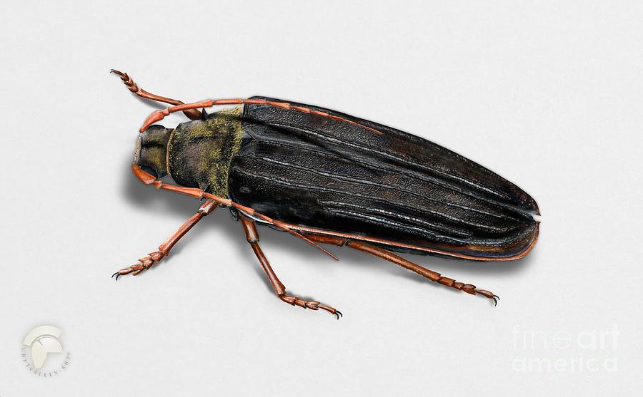 Long-horned Beetle Tragosoma Depsarium - Zottenbock - Meroscelisini - Gammelskogbukk - Raggbock Painting