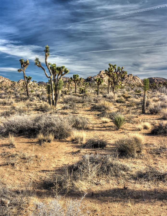 Desert Photograph - Long Shadows  by Heidi Smith