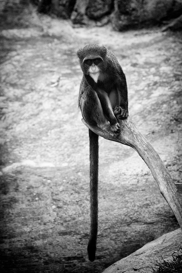 Pose Photograph - Long Tail by Goyo Ambrosio
