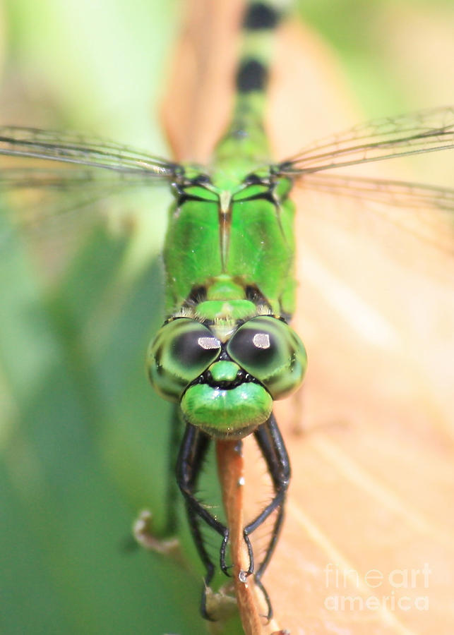 Dragonfly Photograph - Long Time No See by Carol Groenen