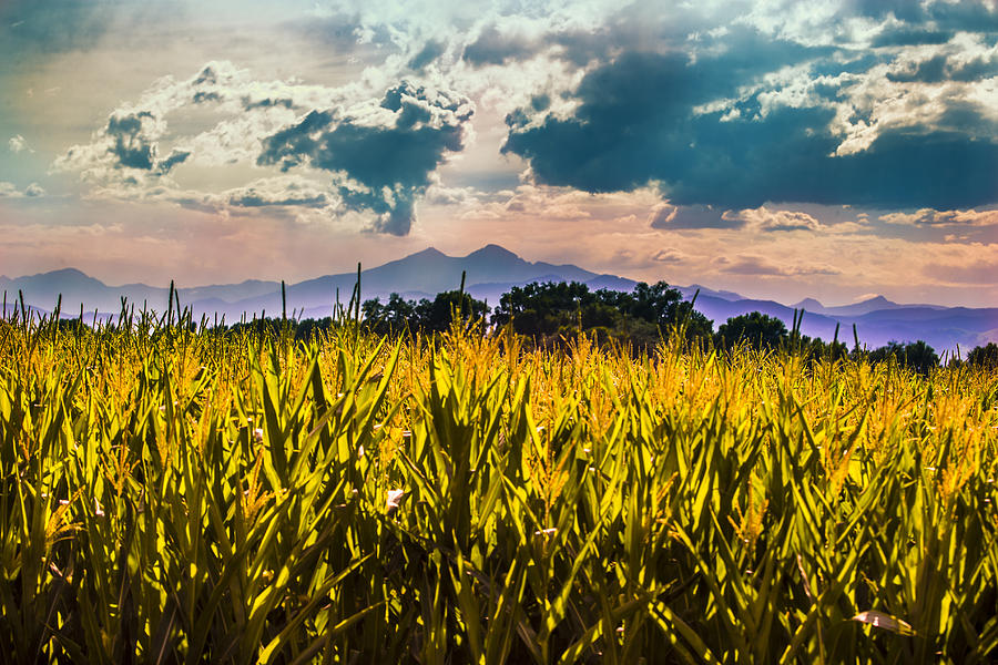 Longmont Photograph - Longs Peak Harvest by Rebecca Adams