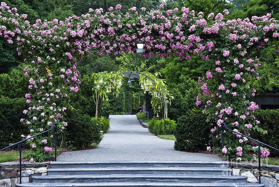 Longwood Rose Arbor Photograph by John Greim