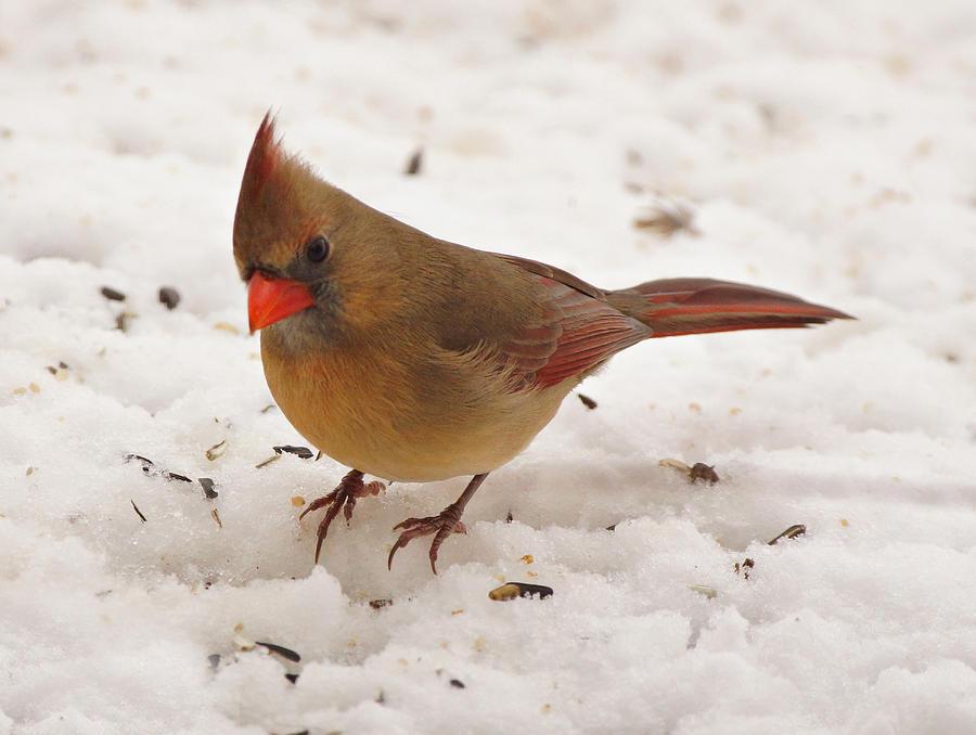 Bird Photograph - Look At You by Sandy Keeton