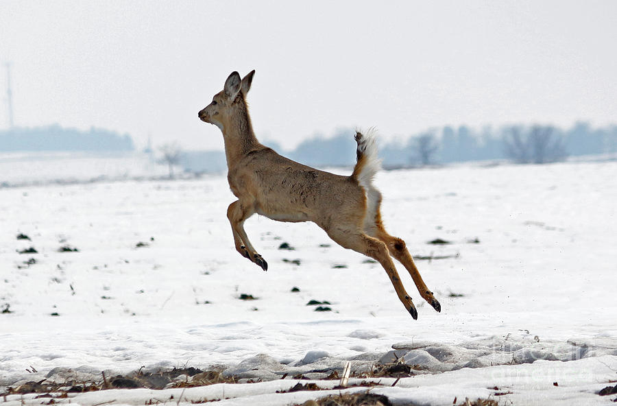 Deer Photograph - Look I Am Flying by Lori Tordsen