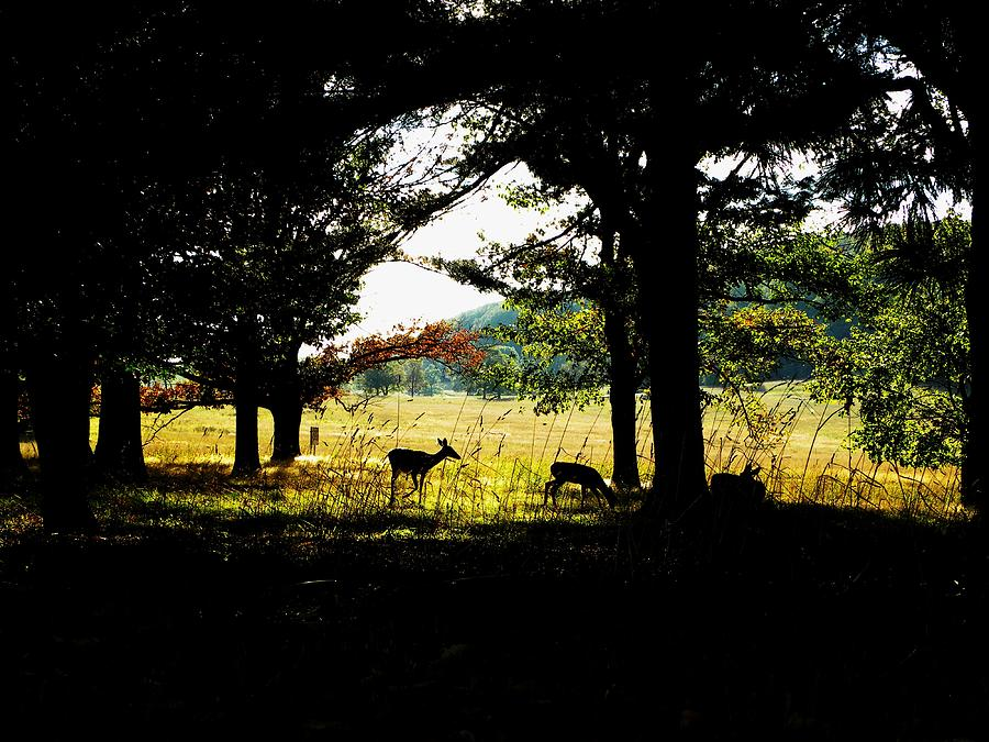 Deer Photograph - Look Out by Christian Rooney