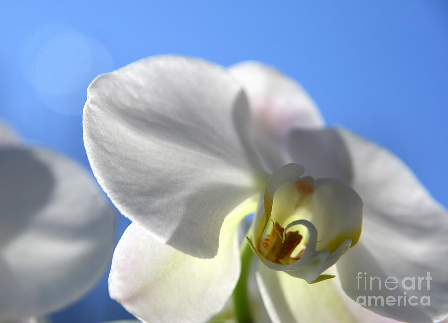 Orchid Photograph - Look To The Sky  by Neal Eslinger