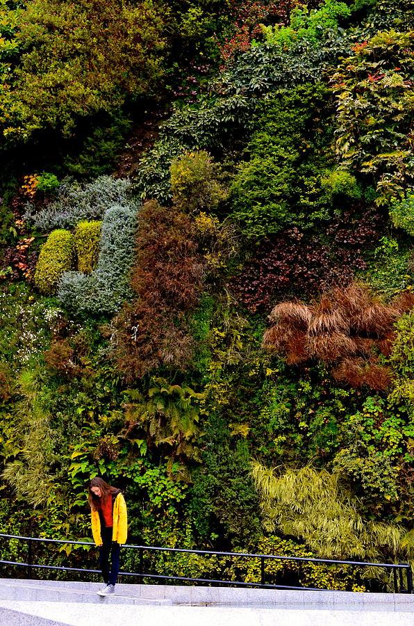 Vertical Garden Photograph - Look Up by Regina Avila