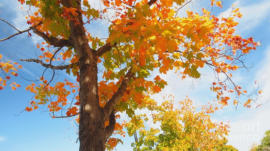Autumn Leaves Photograph - Look Up by Scott Cameron