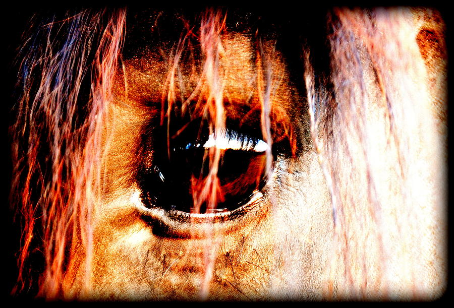 Horse Digital Art - Lookin Right Back At You by Kathy Sampson