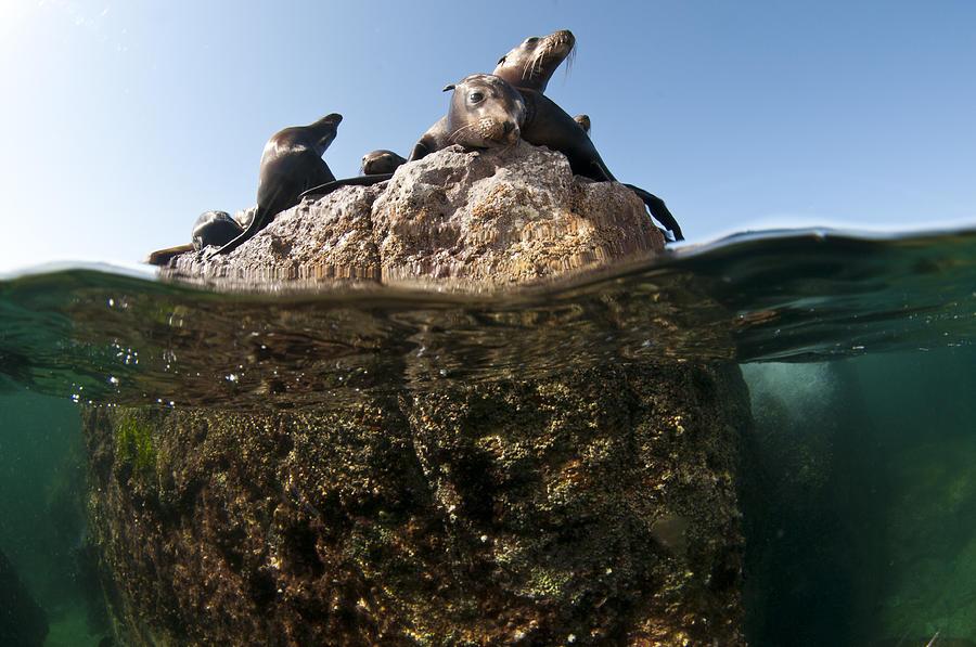 Sea Photograph - Looking At You by David Valencia