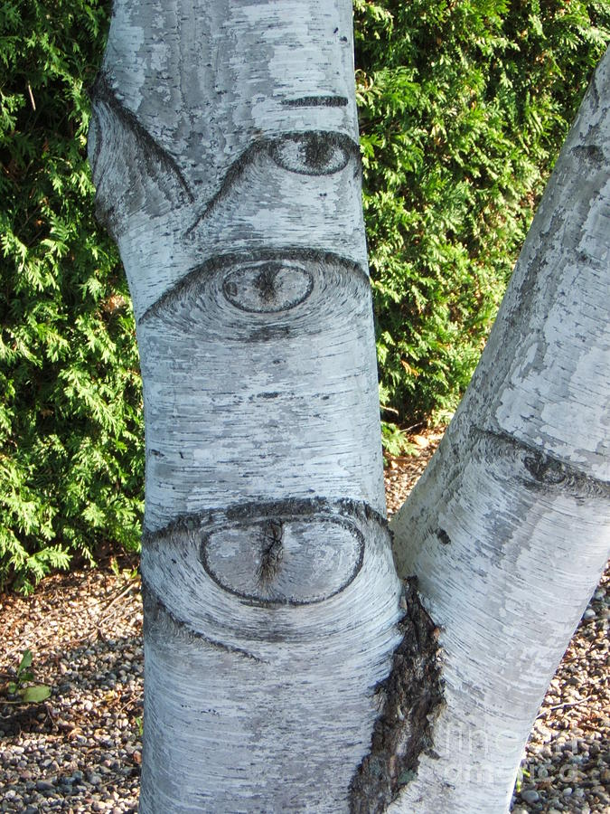 Tree Photograph - Looking At You by Margaret McDermott