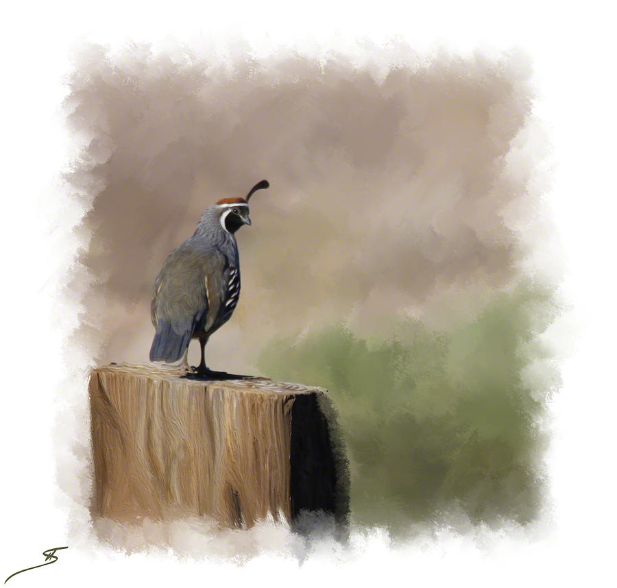 Quail Photograph - Looking Back by Shanna DuGrosse