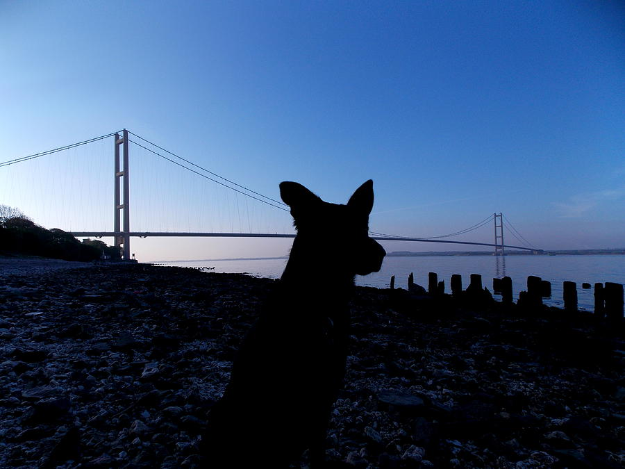 Dog Photograph - Looking Both Ways by Chris Cox
