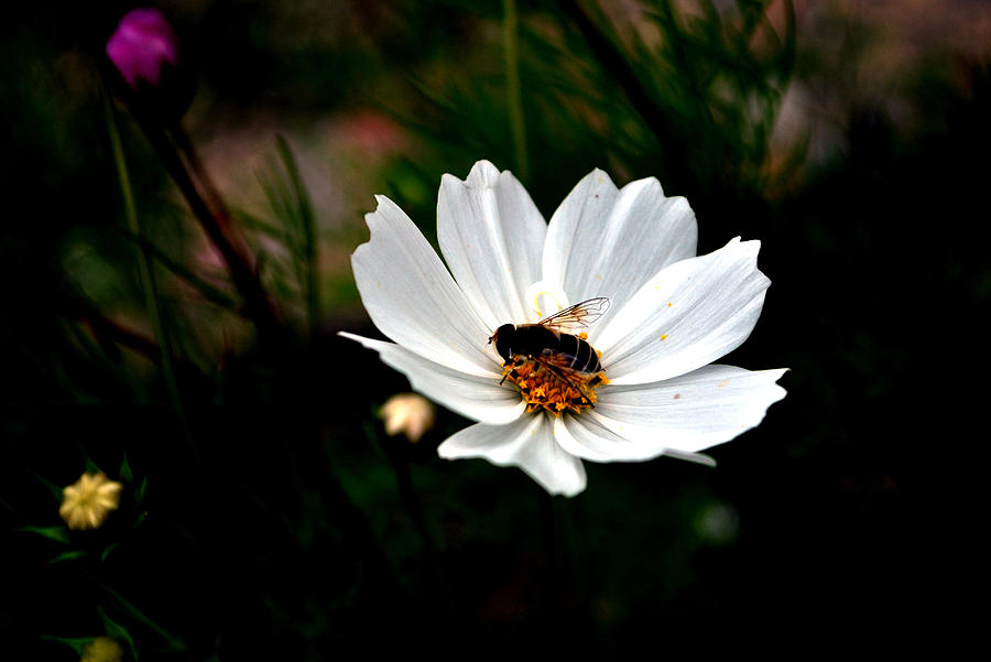 Flower Photograph - Looking For Nectar - Viators Agonism by Vijinder Singh