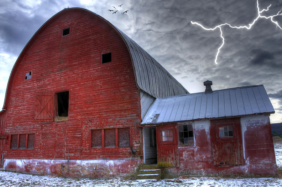 Barns Photograph - Looking For Shelter by David Simons