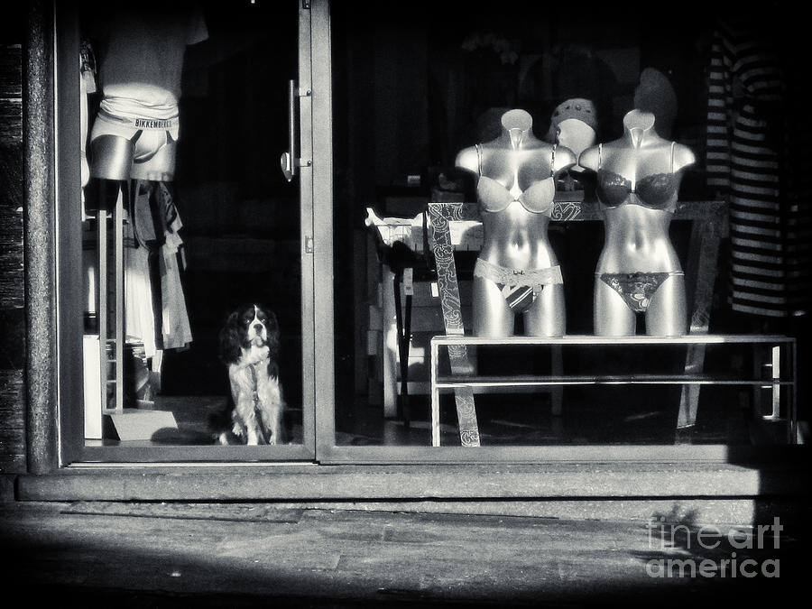 Animals Photograph - Looking Out The Shoppe by Silvia Ganora