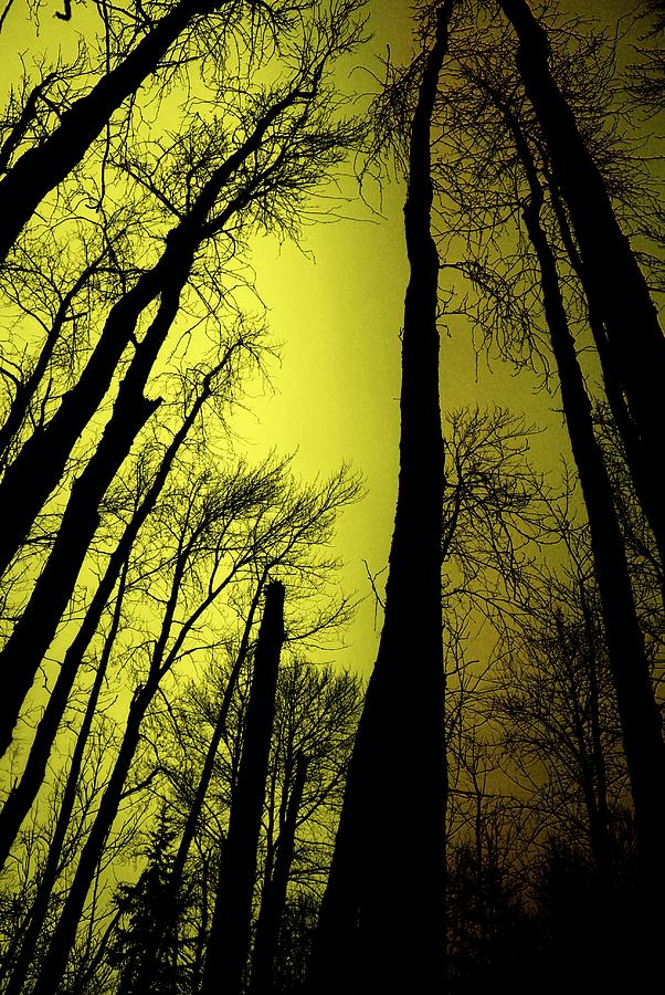 Winter Photograph - Looking Through The Naked Trees  by Jeff Swan