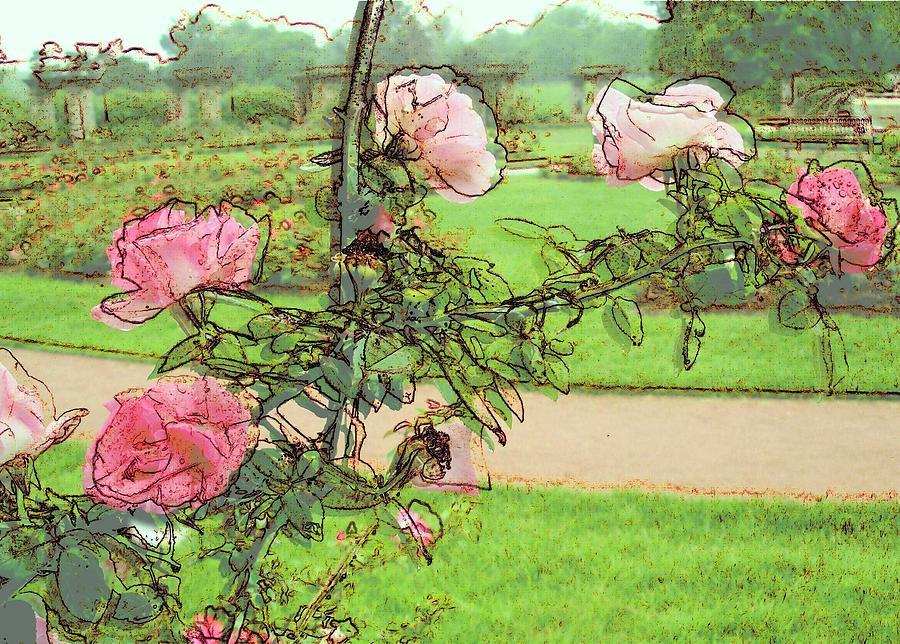 Pink Rose Digital Art - Looking Through The Rose Vine by Stephanie Hollingsworth