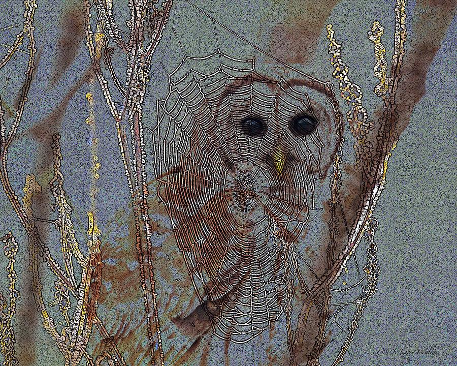 Walker Digital Art - Looking Through The Web by J Larry Walker