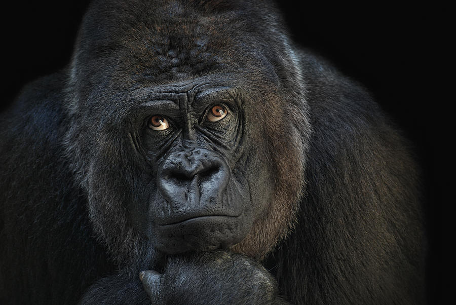 Animal Photograph - Looking Up by Joachim G Pinkawa