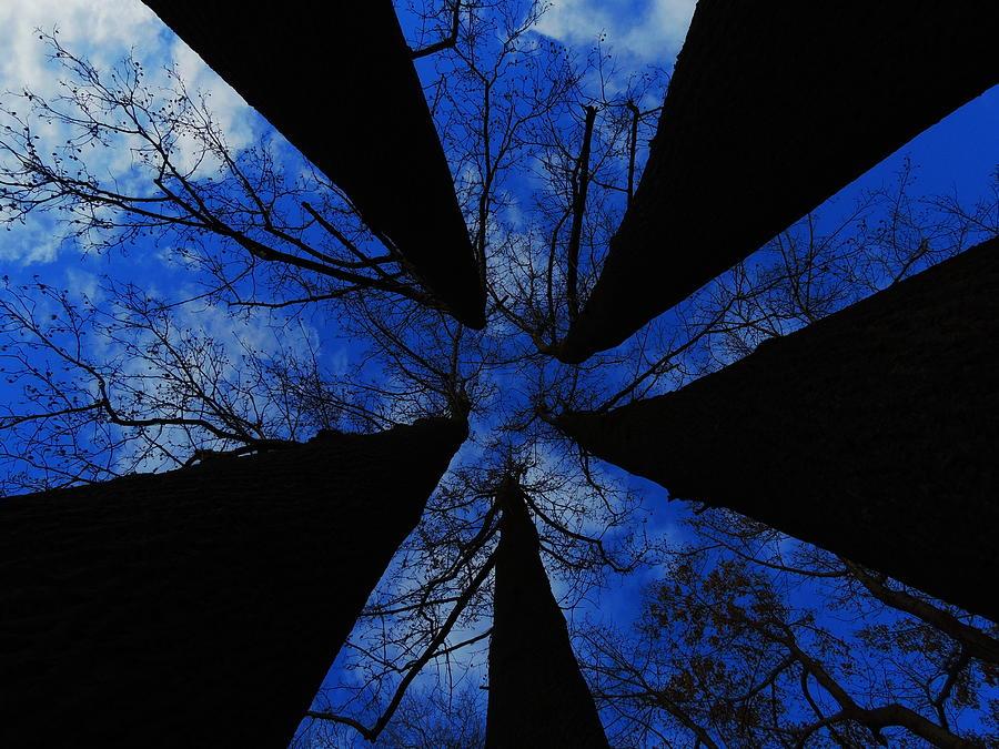 Trees Photograph - Looking Up by Raymond Salani III