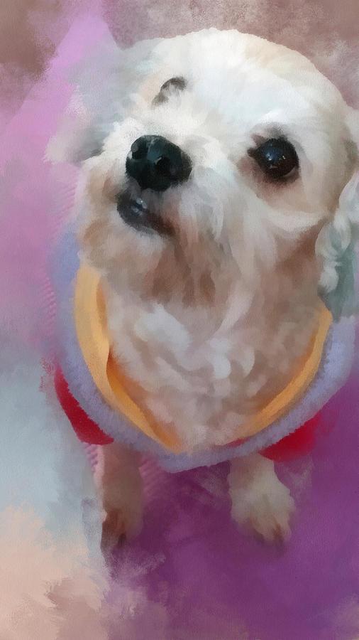 Dog Digital Art - Looking Up To You by Tony Chong