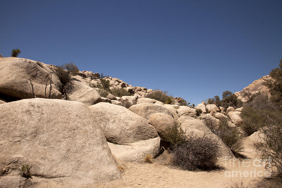 Joshua Tree National Park Photograph - Looks Like It Was Planned by Amanda Barcon