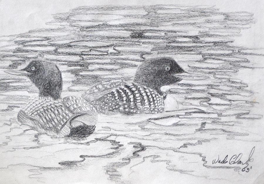 Loon sketch by Wade Clark
