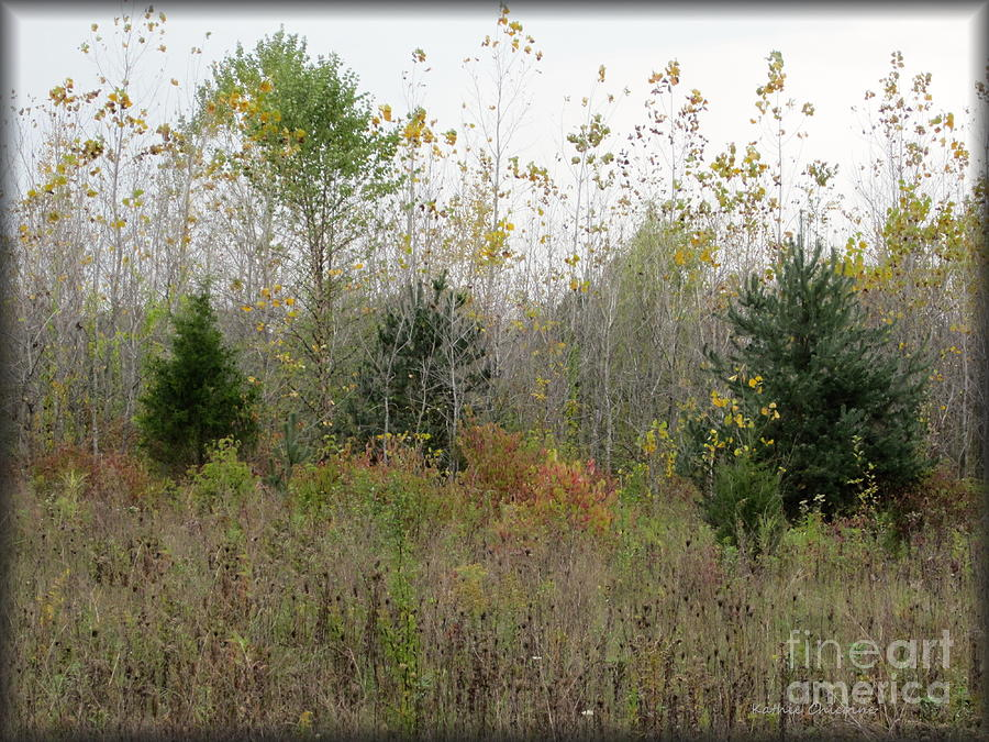 Woods Photograph - Loss by Kathie Chicoine