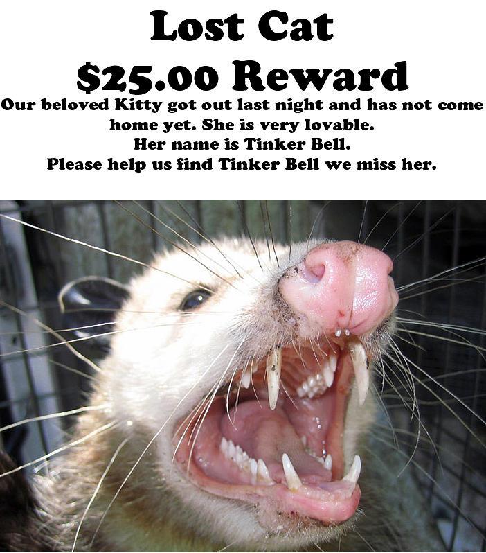Cat Photograph - Lost Cat Cash Reward by Michael Ledray