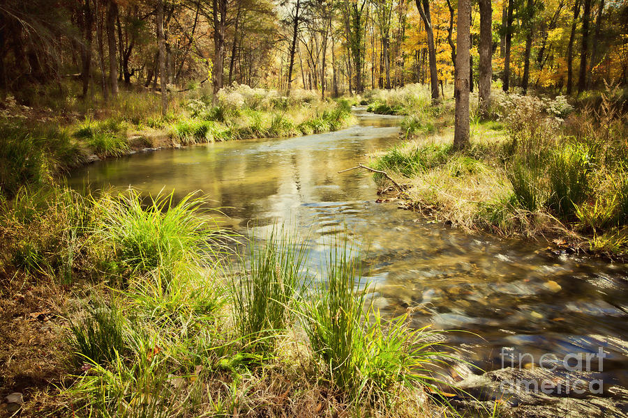 Texture Landscape Photograph - Lost Creek In Autumn Morning by Iris Greenwell