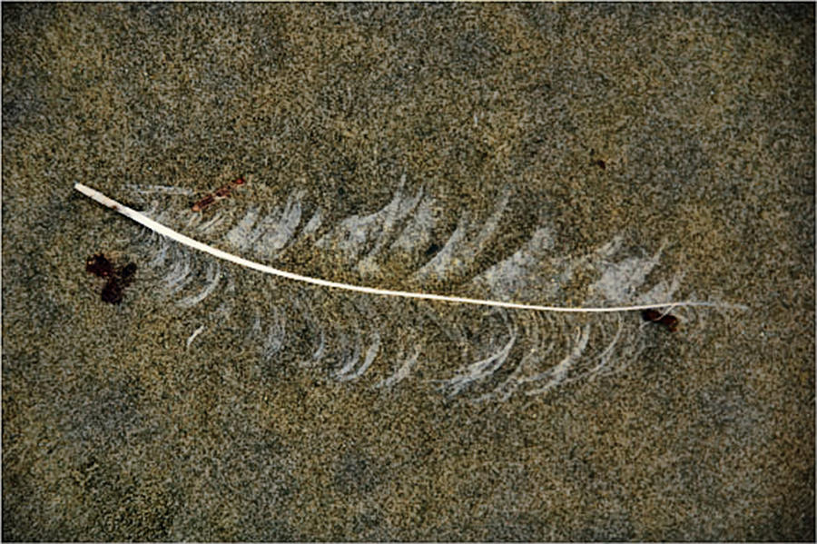 Beach Photograph - Lost Feather by Helen Worley