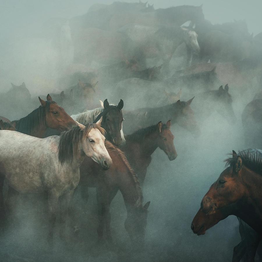 Horses Photograph - Lost Horses by H??seyin Ta??k??n
