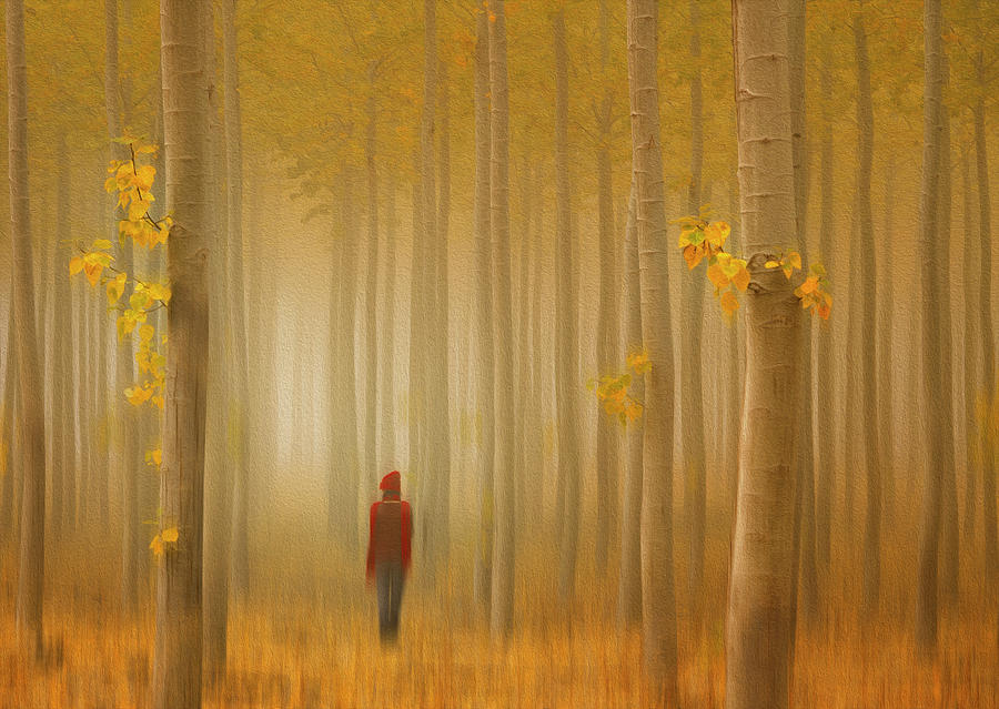 Autumn Photograph - Lost In Autumn by Lydia Jacobs