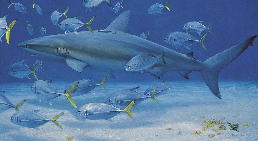 Caribbean Reef Shark Painting - Lost Treasures by Randall Scott