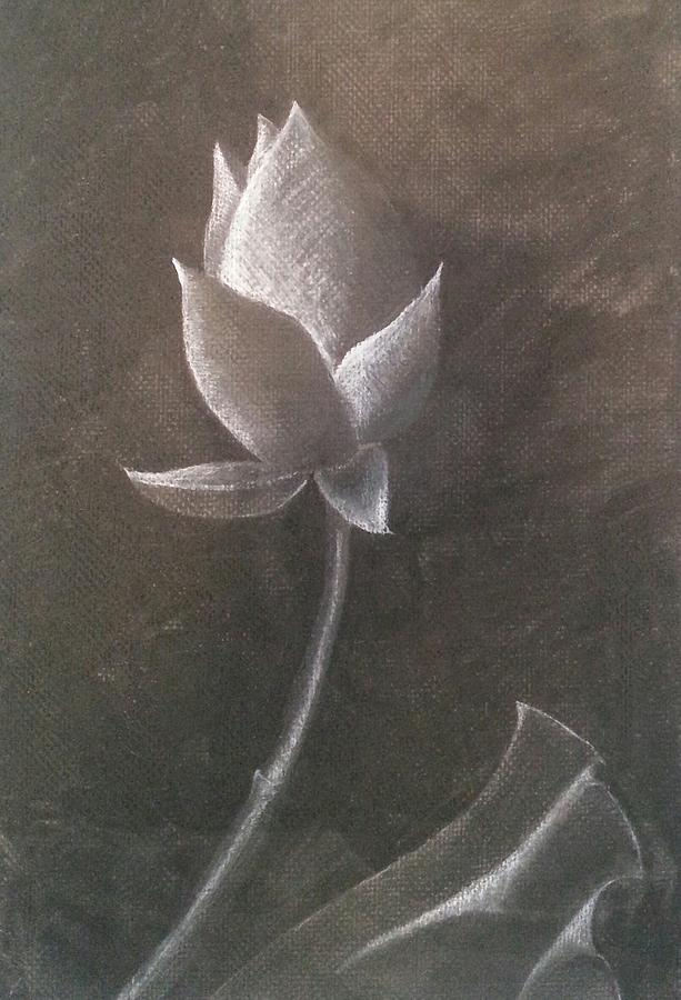 Lotus Flower Drawing - Lotus  by Amy Jago-Ford