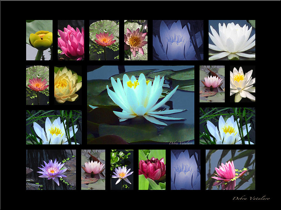 Floral Collage Photograph - Lotus Cluster by Debra     Vatalaro