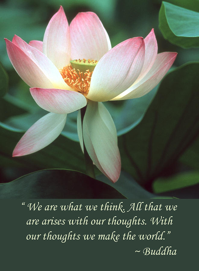 Lotus flower buddha quote photograph by chris scroggins lotus flower photograph lotus flower buddha quote by chris scroggins mightylinksfo