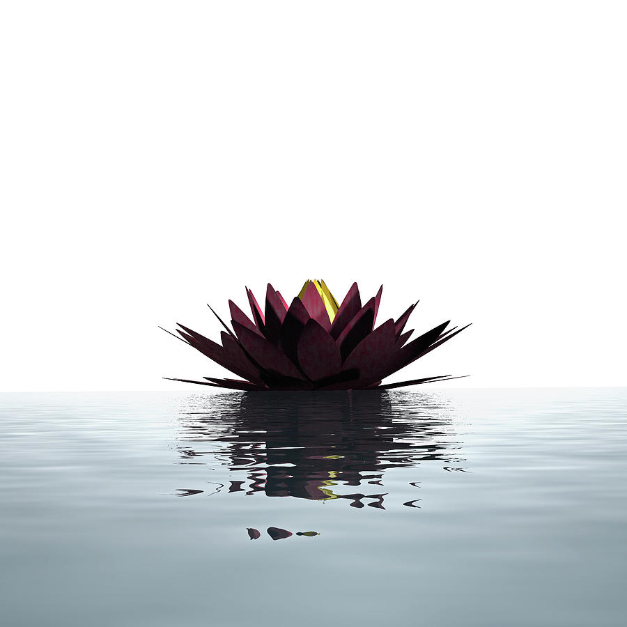 Lotus Flower Floating On The Water Photograph by Artpartner-images