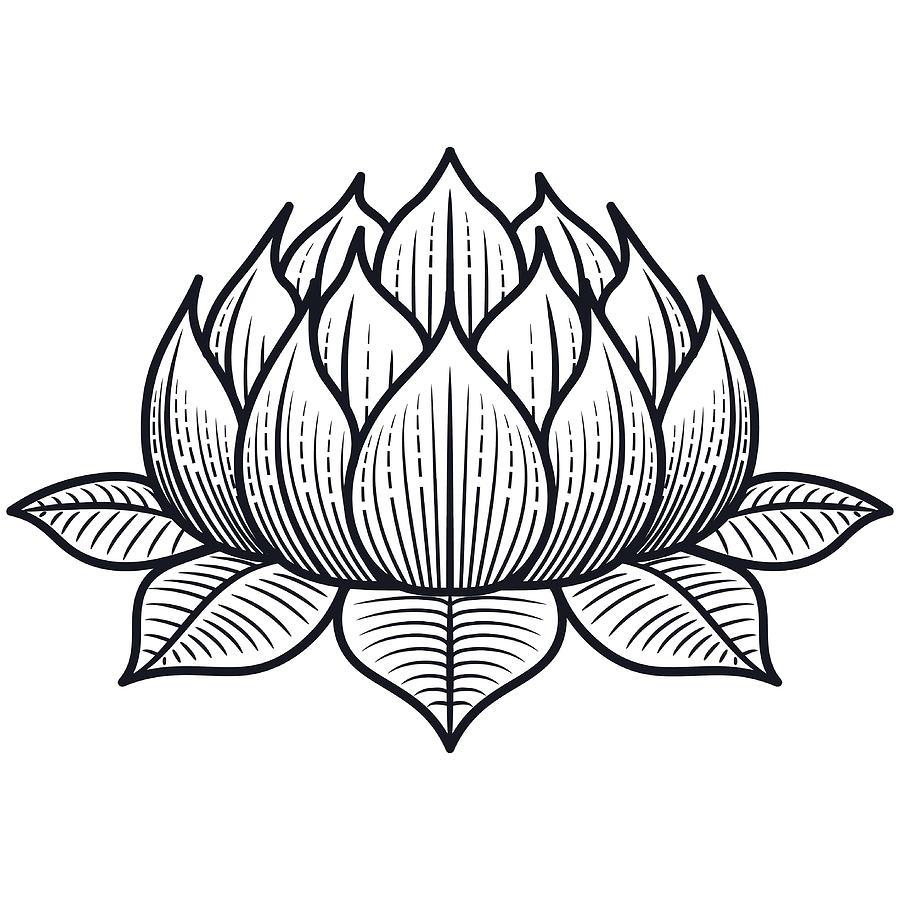 Lotus Flower Silhouette Illustration Vector By Georgemanga