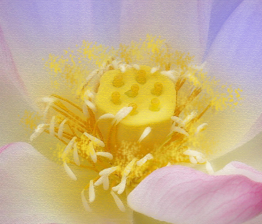 Flowers Painting - Lotus In Side by Lila Shravani