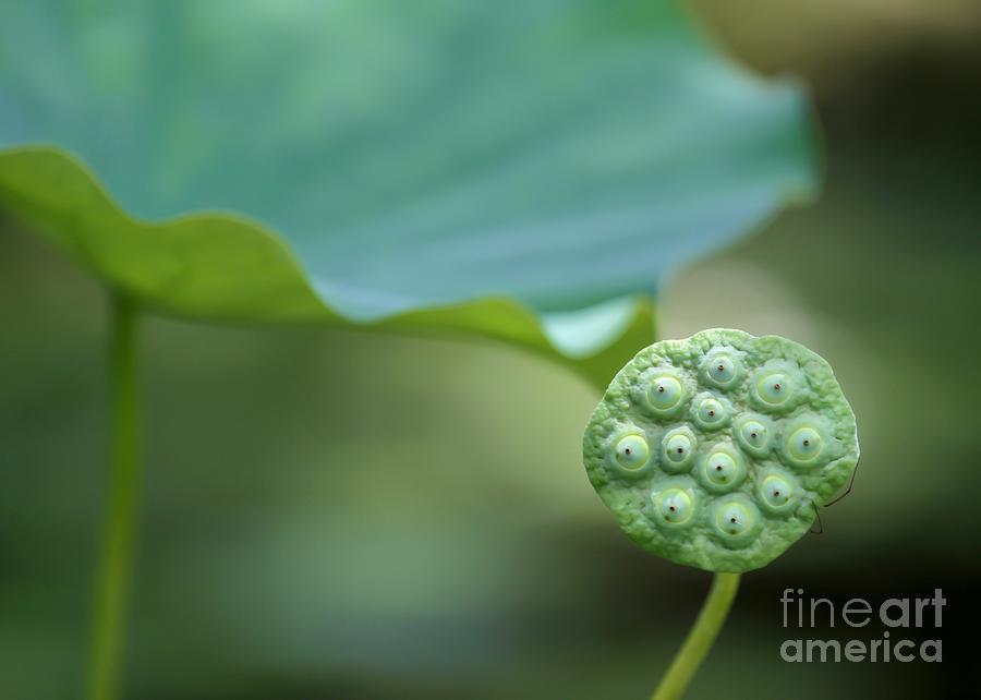 Macro Photograph - Lotus Leaf And A Seed Pod by Sabrina L Ryan