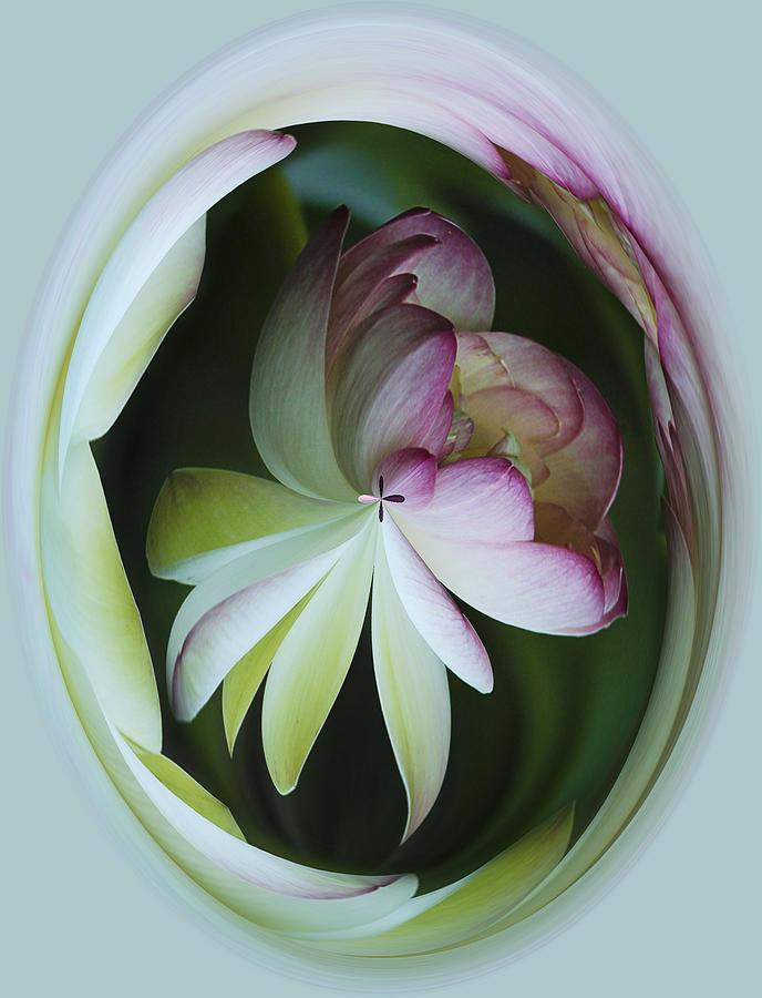 Flower Photograph - Lotus Mirror by Jean Noren