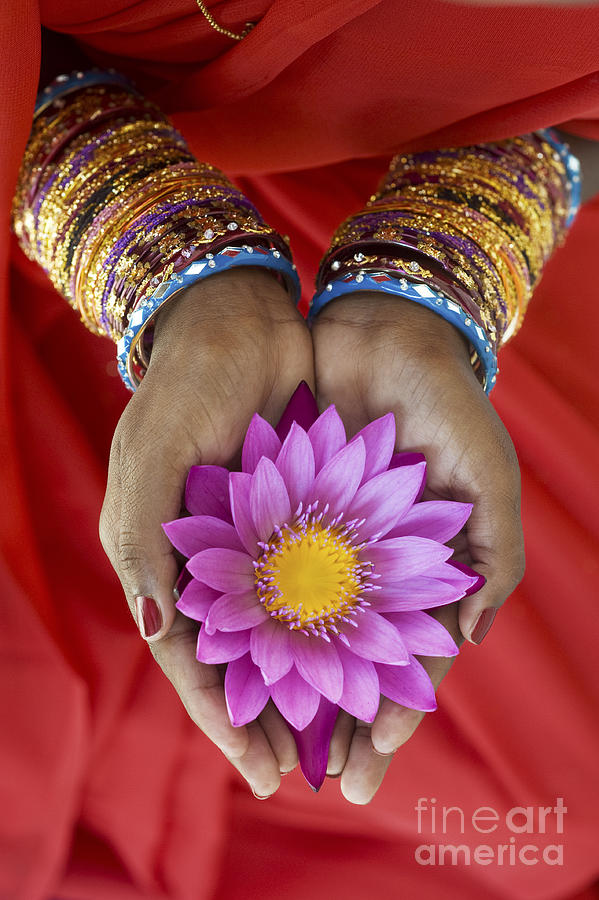 India Photograph - Lotus Offering by Tim Gainey