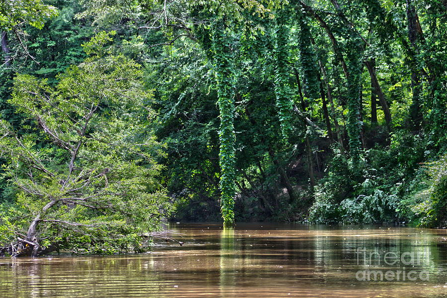Cypress Photograph - Louisiana Bayou Toro Creek Swamp by D Wallace