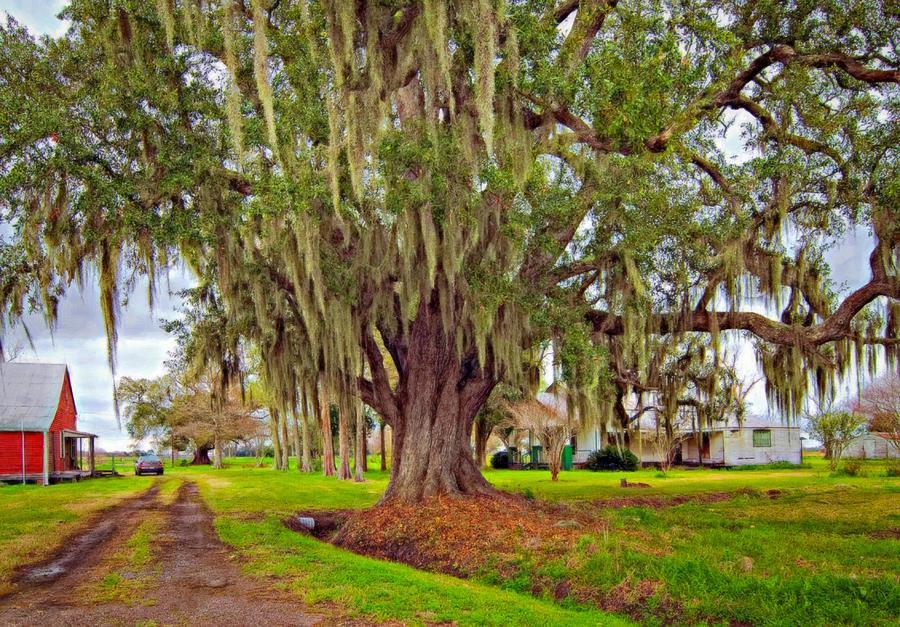 New Orleans Photograph - Louisiana Country Oil by Steve Harrington