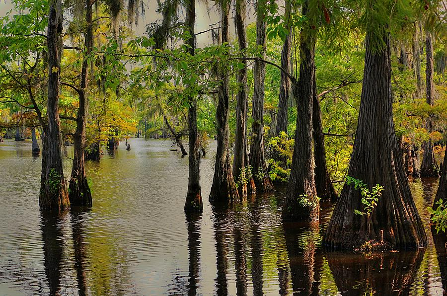 Swamp Photograph - Louisiana Cypress Swamp by Ester McGuire